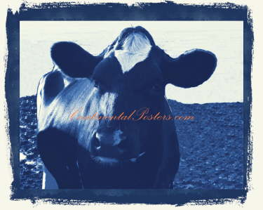 Cow in blue 2