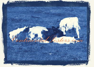 Cow with calves blue