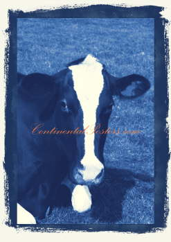 Cow long head blue