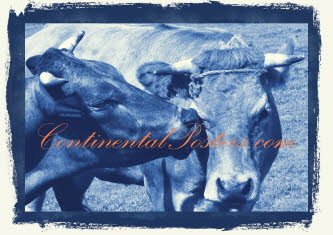 Cows with love blue