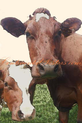 young cows 2 special art