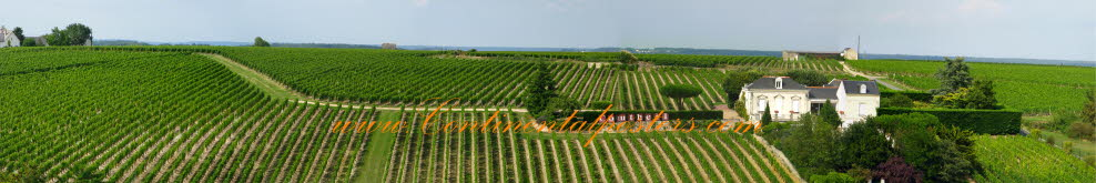 Vineyard panorama France poster
